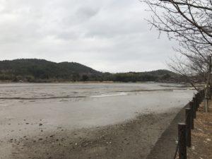 京都広沢池