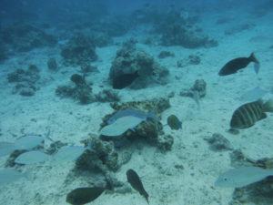 サイパンマニャガハ島
