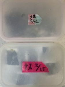 セリア マスキングテープ 15mm×12m ピンクとピーチ